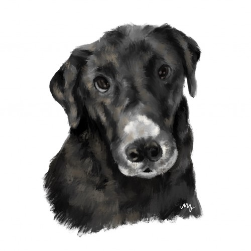Personalized Pet Portrait